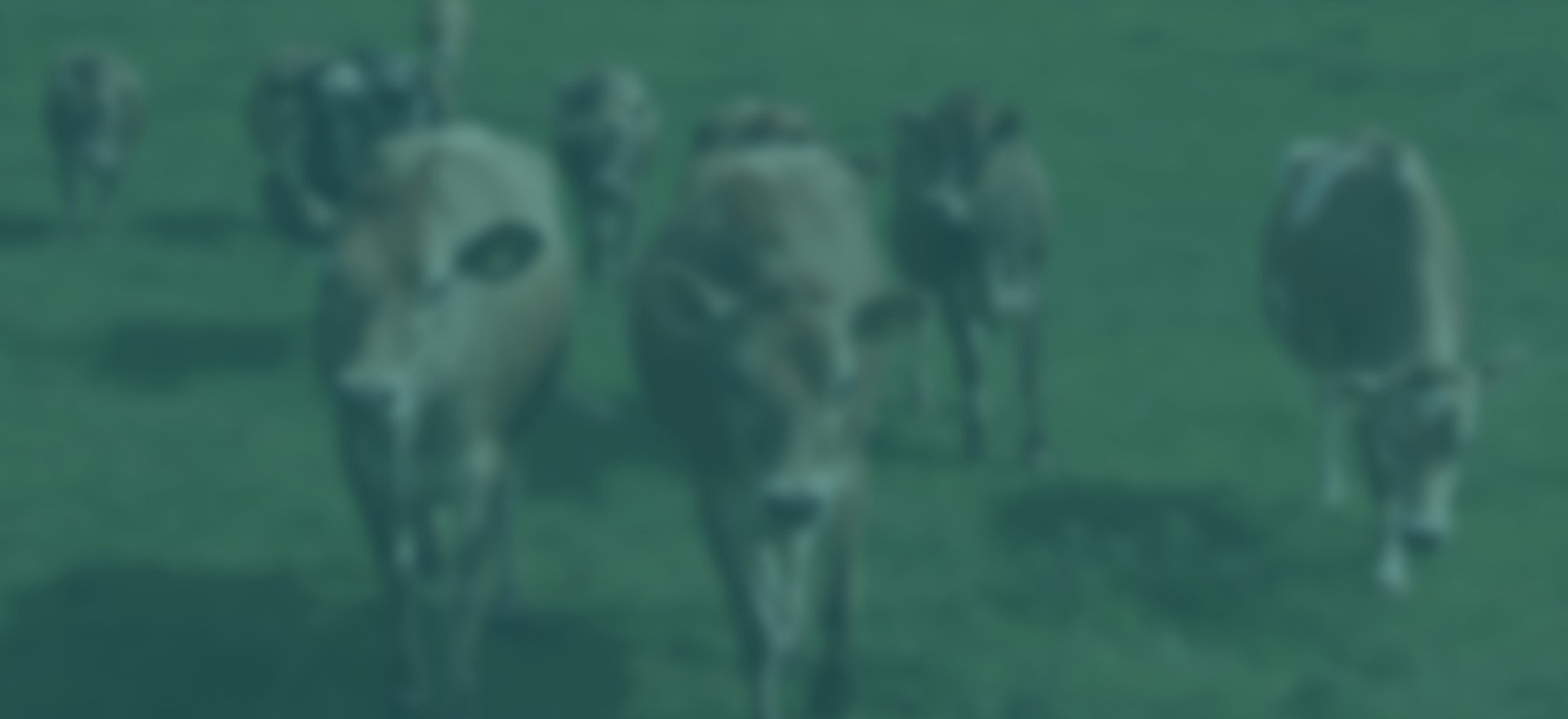 Farm Track is an easy-to-use Livestock Manager that is used to collect the data users need to make better decisions for their livestock herds